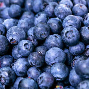 Picture of Blueberries (12x125g)