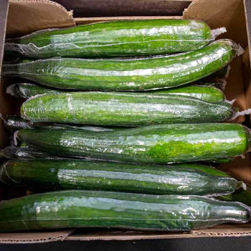 Picture of Cucumbers (14)