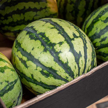 Picture of Watermelon (6)