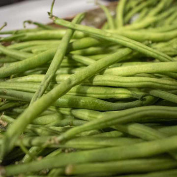 Picture of Fresh Fine Beans (1.5kg)