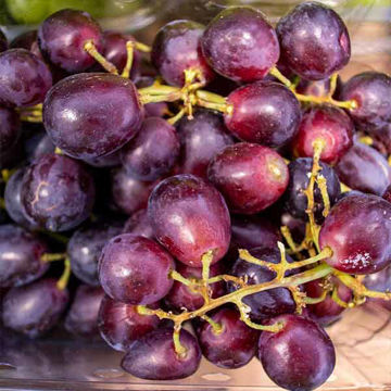 Picture of Red Grapes (seedless) (10x500g)