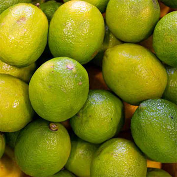 Picture of Limes (60)