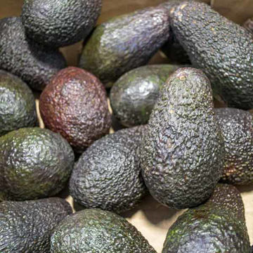 Picture of Avocadoes (RTE) (18)