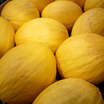Picture of Honeydew Melon (12)